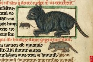 Středověká kočka