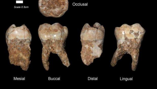Zubní plak starý 400 000 let